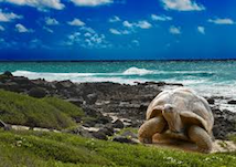 A turtle on the beach
