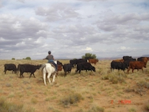 Person on horse herding cattle